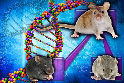 Gene Expression In Mice Poster by Science Source