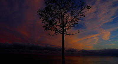 Genesis Tree Poster by Stephen Melcher
