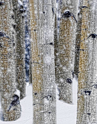 Gently Falling Forest Snow Poster by Don Schwartz