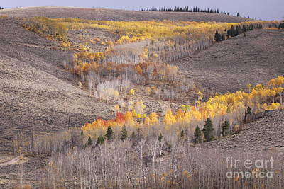Geometric Autumn Patterns In The Rockies Poster