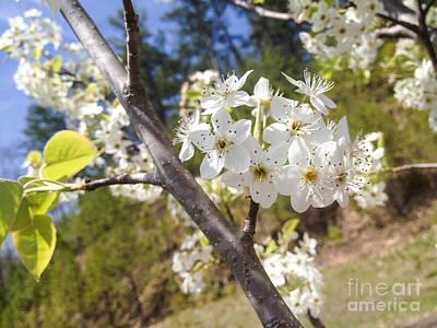 Georgia Blossoms Poster