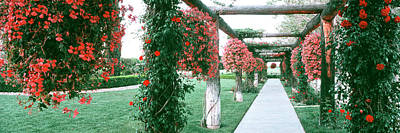 Geranium And Rose Vines Along A Walkway Poster