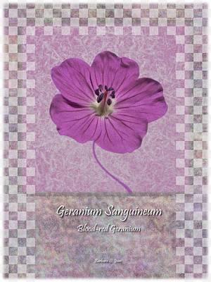 Geranium Purple Poster 3 Poster by Barbara St Jean