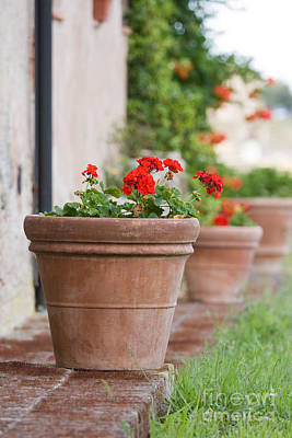Geraniums In A Terracotta Pot Poster by Ruth Black