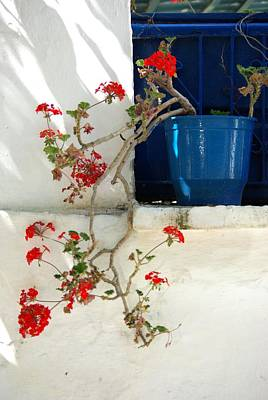 Geraniums In Blue Pot In Greece Poster by Andy Fletcher
