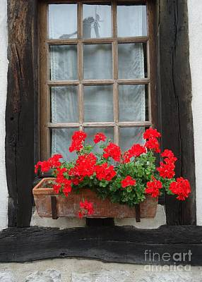 Geraniums In Timber Window Poster
