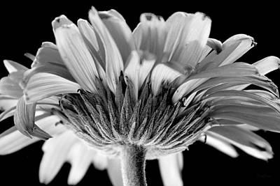 Gerber Daisy In Bw Poster by Deborah  Crew-Johnson