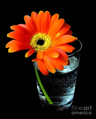 Gerbera Daisy In Glass Of Water Poster by Nina Ficur Feenan