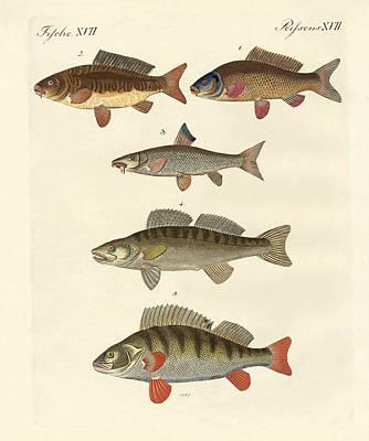 German Sea Fish Poster by Splendid Art Prints
