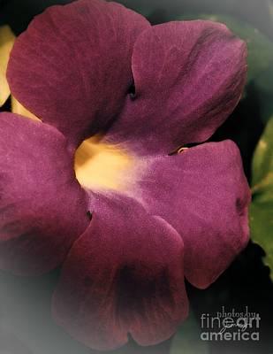 Ghana Violet Poster