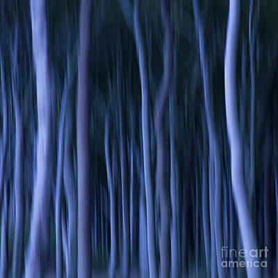 Ghost Forest Poster by Heiko Koehrer-Wagner