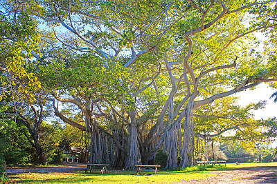 Giant Banyan Tree Poster by Iryna Goodall
