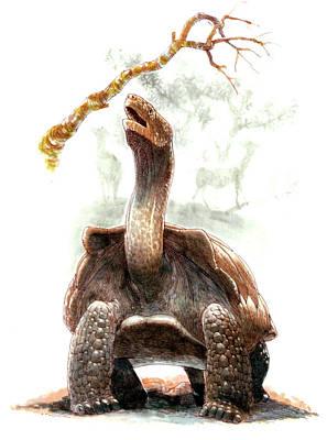 Giant Tortoise Poster by Deagostini/uig