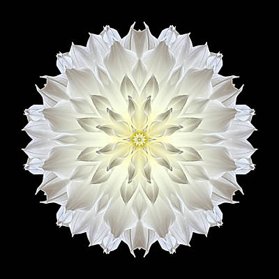Poster featuring the photograph Giant White Dahlia Flower Mandala by David J Bookbinder