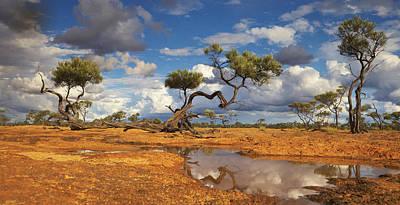 Gidgee Trees And Waterhole Queensland Poster