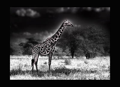 Giraffe Poster by Christine Sponchia
