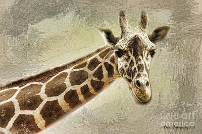 Poster featuring the photograph Giraffe by Linda Blair