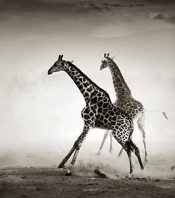 Giraffes Fleeing Poster by Johan Swanepoel