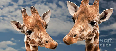 Giraffes In Love Poster by Christine Sponchia