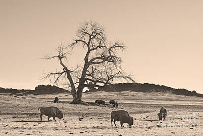 Give Me A Home Where The Buffalo Roam Sepia Poster by James BO  Insogna