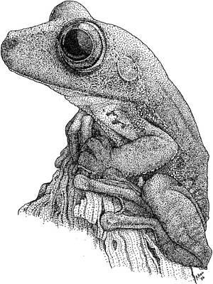 Gladiator Treefrog Poster