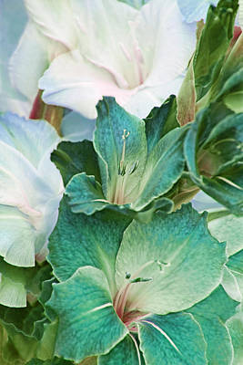 Gladiola Flowers Bouquet Teal  Poster by Jennie Marie Schell