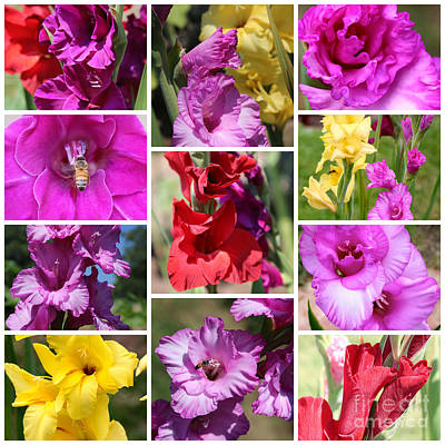 Gladiolus Collage Poster