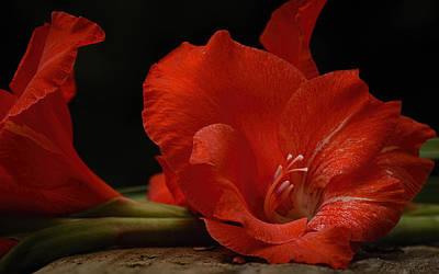 Gladiolus II Intimate Poster