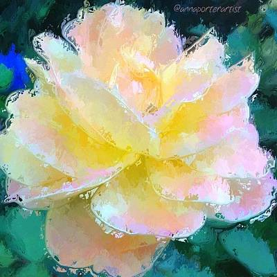 Glazed Pale Pink And Yellow Rose  Poster by Anna Porter
