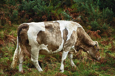 Poster featuring the photograph Glendalough Cattle 1 by Trever Miller