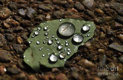 Glistening Raindrops Poster