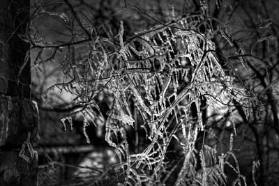 Gloomy Icy Tree Poster by Brett Engle