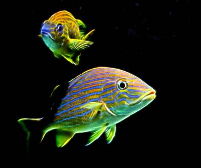 Glow Fish Poster by Judy Vincent