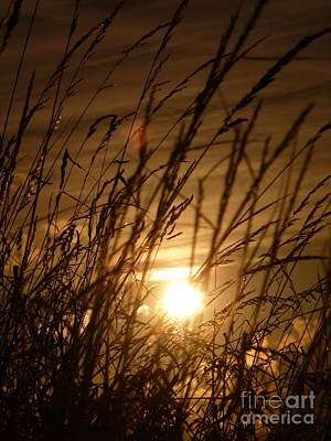 Glow Through The Grass Poster