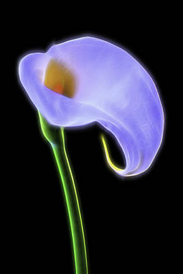 Glowing Calla Lily Poster by Garry Gay
