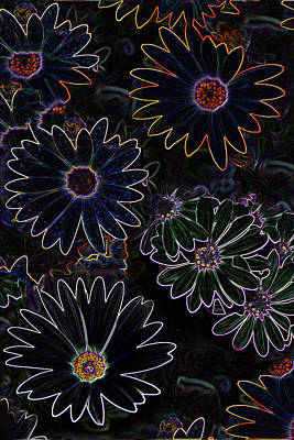 Glowing Daisies Poster