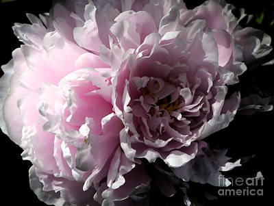 Glowing Pink Peony Poster by Christiane Schulze Art And Photography