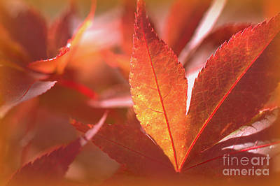 Glowing Red Leaves Poster