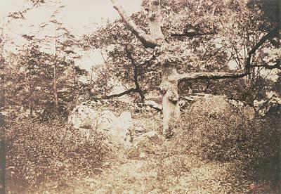 Gnarled Oak Tree Near Lepine Crossroads Gustave Le Gray Poster