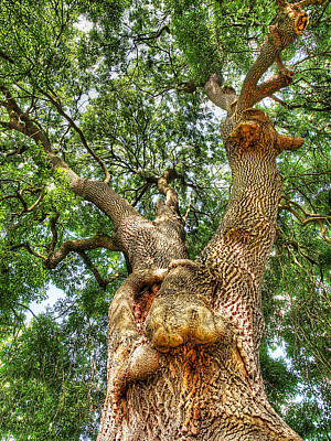 Gnarled Old Tree Vertical Poster by Gill Billington