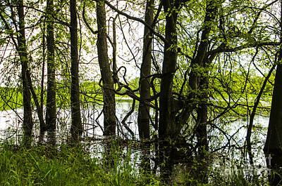Gnarly Marsh At Cahokia Mounds Illinois Poster by Deborah Smolinske