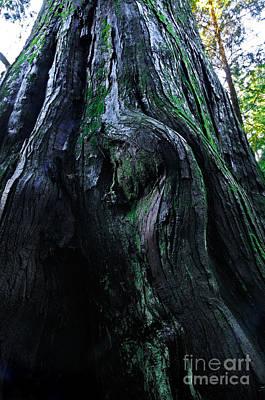 Gnarly Tree Poster by Terry Elniski