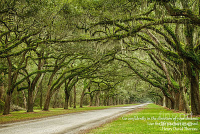 Go Confidently In The Direction Of Your Dreams Endless Oaks Inspirational Art Poster by Dawna  Moore Photography