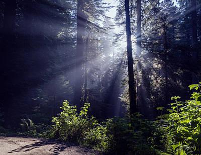 God Rays Through The Fog Poster by Vishwanath Bhat