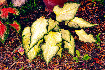 Gold Bi Color Leaves Poster by Linda Phelps