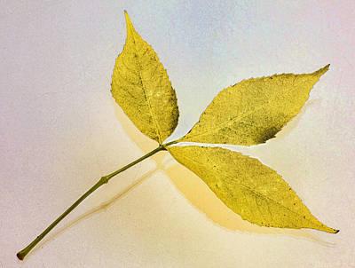 Gold Leaf Poster