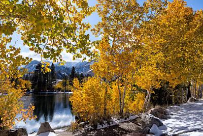 Golden Aspen On The Lake Poster