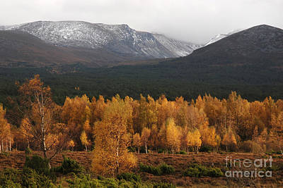 Golden Autumn - Cairngorm Mountains Poster by Phil Banks