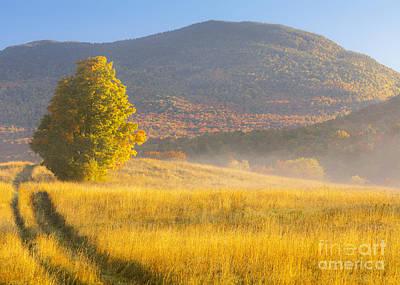 Golden Autumn Morning Poster