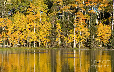 Golden Autumn Pond Poster